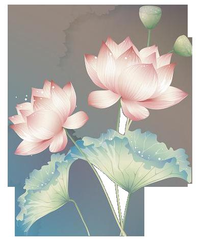 hoa sen van no, hoa sen vẫn nở, hoasenvanno