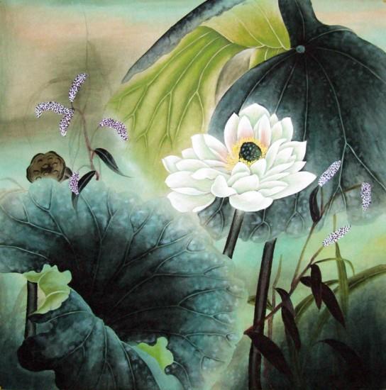 hoa sen, lotus
